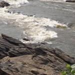Blackfly breeding rapids