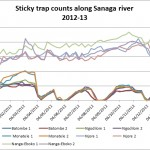 Graph of blackfly numbers on sticky traps 2012 13
